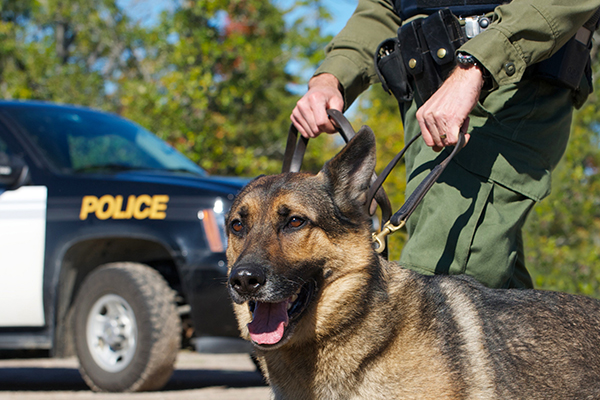 canine drug searches,canine drug searches lawyer,canine drug searches attorney,canine drug searches Philadelphia